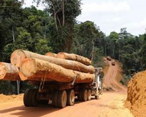 Pillage des forêts de la Casamance: deux camions remplis de bois saisis à Sindian