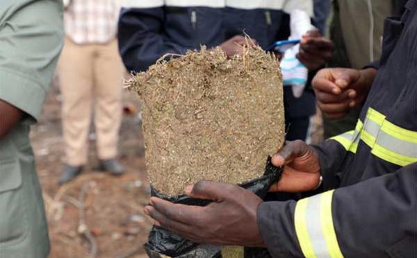 Situation de la lutte contre le trafic de drogue du mois de juin : 108 kg de chanvre saisis et 31 personnes appréhendées
