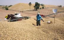 Baisse du taux des exportations : Les blocages de l'arachide en cause