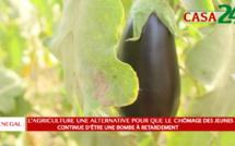 L'AGRICULTURE UN OUTIL DE LUTTE CONTRE LE CHÔMAGE DES JEUNES(Reportage)